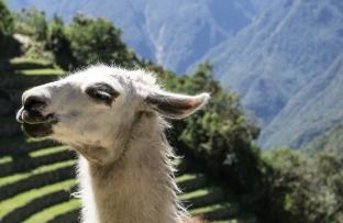 2016-05-04 ** Peru 2016 05 ** 1463